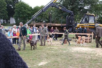 Jagdhundevrostellung auf de Landesgartenschau