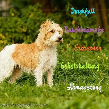 Bild: www.tierischeaugenblicke.de