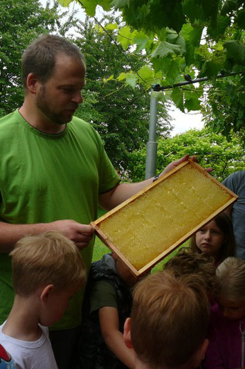 """ein """"Honigrahmen"""" mit den verdeckelten Waben"""