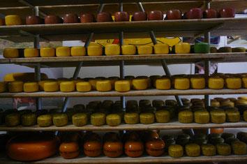 Käse in unterschiedlichen Rezepturen und Größen.