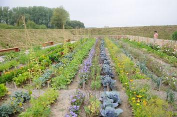"Die Gemüsebeete in den ""Fischergärten"