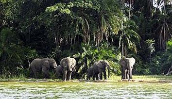 Isola di Rubondo - Lago Vittoria, Tanzania