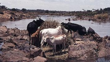 Nzoia River
