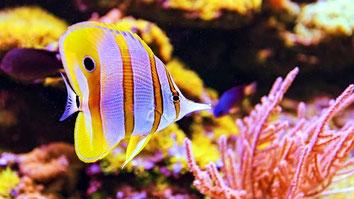 Kiunga coral reef