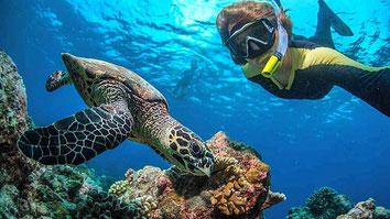 Crab. Kiunga Marine National Reserve