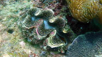 Sea. Kiunga Marine National Reserve