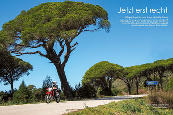 Prächtig beschirmt: Frühlingsfrisches Piniengrün säumt die Landstraße durch den Nationalpark Strofília.