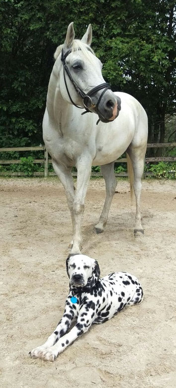 Jackson Five vom Furlbach 5 Monate alt mit seinem Kumpel...17 Juli 2016