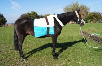 Pferd bei der Bioresonanz, Pferdebioresonanz, Bioresonanz für Tiere