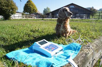 Bioresonanz für Hunde, Bioresonanz für Tiere