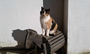 Katze Mimi, Mayr-Eichberg