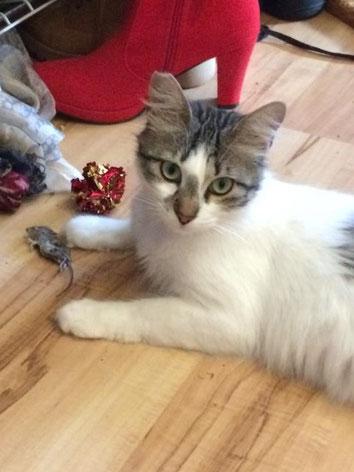 Chioni mit ihrer Lieblingsspielmaus