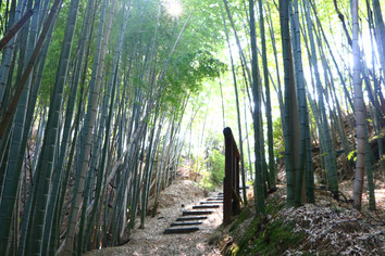 shiraishijima bamboo forest hiking path