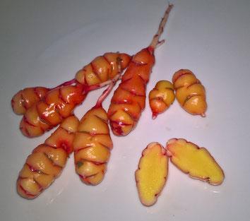 Oca, Oxalis tuberosa, Knolliger Sauerklee, rosa mit gelbem Fruchtfleisch