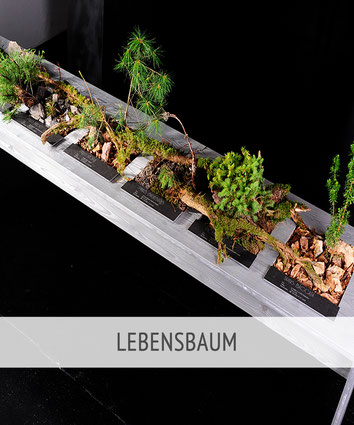 Habegger.1968 - Floristik - Lebensbaum