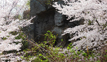 春の鷹取山(三浦半島)