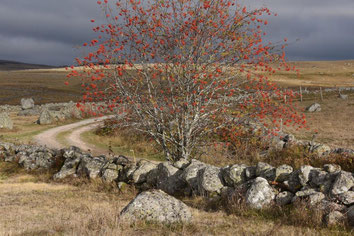 chemin vers Marchastel