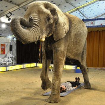 Im Circus im Elefantendorf aufgenommen