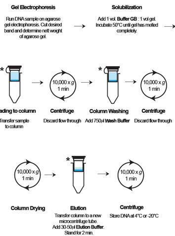 Extraction of DNA from Agarose gels, Aufreinigung DNA aus Agarose