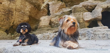 tiertraining diamant, hundetraining, gruppentraining, alltagstraining hund, social walks, kurse hundetraining, hundeschule salzburg, hundetraining österreich, welpentraining, junghundekurs, hundekurs salzburg, nasenarbeit hund, beschäftigung hund