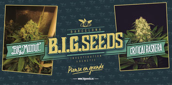 comprar semillas marihuana online envios discretos
