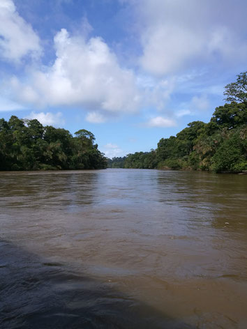 Transfer service between La Fortuna and Tortuguero. Boat trip from La Pavona