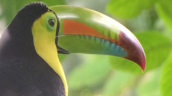 Visita a Costa Rica de 5 noches