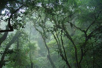 Viaje de un día ida y regreso desde La Fortuna a Monteverde
