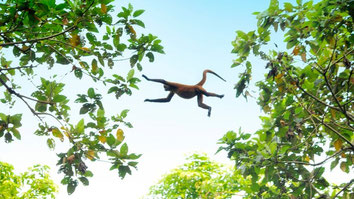 Visit Costa Rica Nature Lovers 6 day  5 night