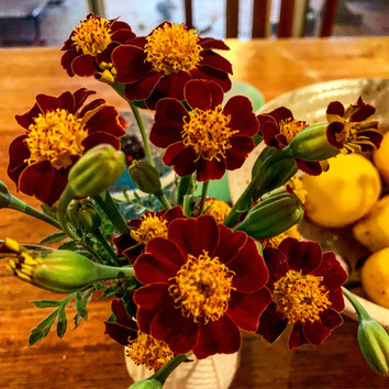A vase of Court Jester Marigolds.