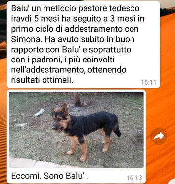Balù (mix pastore tedesco 3 mesi)