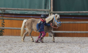 Hippolini Pony auf Reitplatz