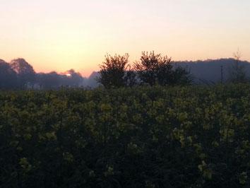 Sonnenaufgang über dem Rapsfeld