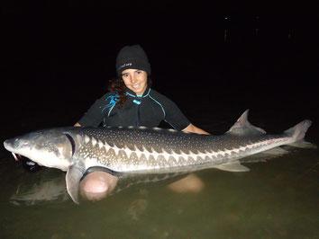 pêche de l'esturgeon transmontanus