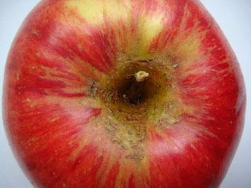 Roter Apfel, schön, naturbelassen, von oben gesehen, mit Stängel