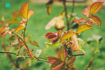 hojas, otoño, fotografia de naturaleza, tania delgado fotografia