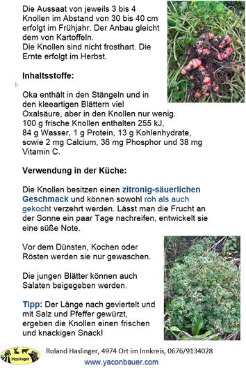 Info Knolliger Sauerklee, Oca, Oka, Yam, Oxalis tuberosa, Oca kaufen frische Knollen vom Bauer regional
