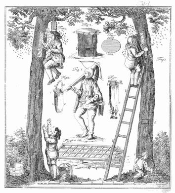 Zeidlerei – Historische Darstellung der Waldimkerei aus Adam Gottlob Schirachs Wald-Bienenzucht von 1774