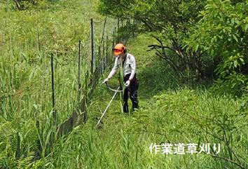作業道の草刈り