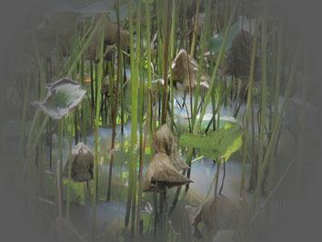 Das Wachstum des Lotus beginnt im Sumpf und endet in einer reinen Blüte.