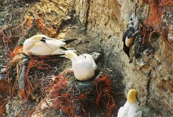 Die Vögel sammeln viele Müllreste für ihre Nester.