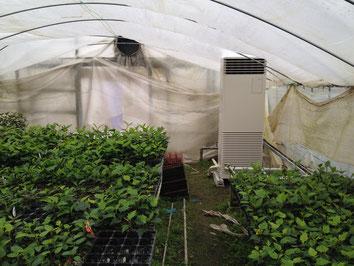 花 農家のビニールハウス エアコン暖房