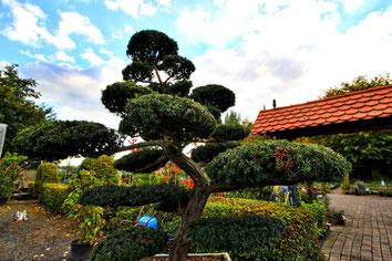 Garten-Bonsai