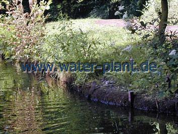 Xylitwalzen als Uferbefestigung