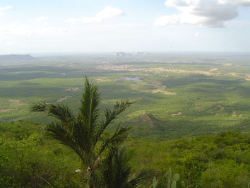 Feuchtsavanne | Quelle: https://upload.wikimedia.org/wikipedia/commons/7/71/1632x1224_sertaoe_rio_grande_do_norte_landscape_panorama_brasil.jpg