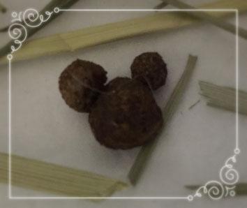 夢の国にいるミッキーマウスのような形のうんこ