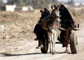 Иракские девушки на повозке, запряженной ослом