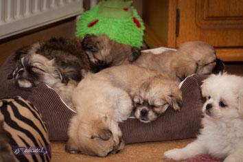 Puppies 2013
