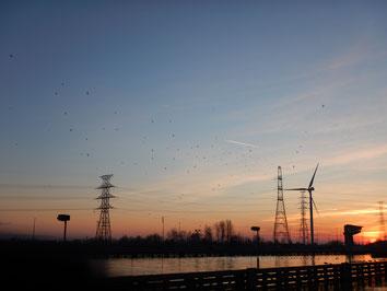 Windturbines in industriegebied Genk Zuid