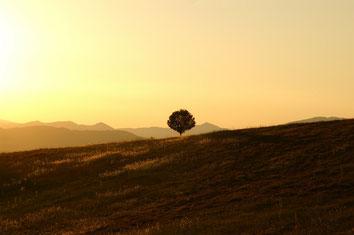 Einsamer Baum in umbrischer Landschaft